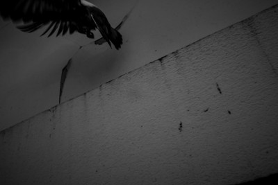 Abstract Bird off a Wall
